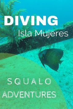 Diving Isla Mujeres With Squalo Adventures