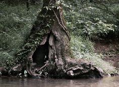 Perfect natural hideaway
