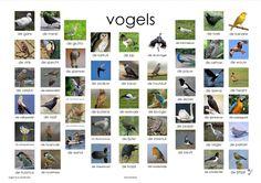 vogels plaat