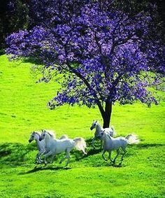 Beautiful....horses lavender tree