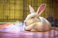 11 small animals find homes during Dakin's 'Super Small Saturday'