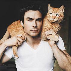 Caras gatos com seus gatinhos. Miau!!!!