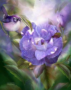 Lavender Rose - Carol Cavalaris