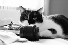 czarno-biały kot z obiektywem