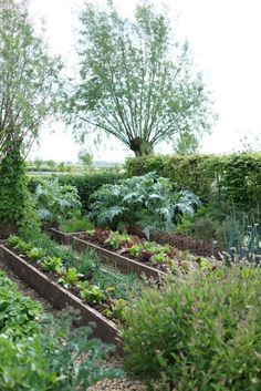 Potager Garden Raised bed with wood chip walkway Garden Cottage, Garden Beds, Terrace Garden, Garden Sofa, Garden Furniture, Farm Gardens, Outdoor Gardens, The Farm, Potager Garden
