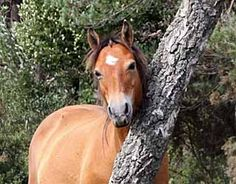 Ease the Itch to Stop Mane and Tail Rubbing in Horses