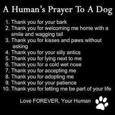 A humans prayer to a dog