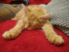 Cute Overload : Sleepy kitten