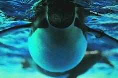Pingüinos ◘ Una increíble toma de un Pingüino Emperador bajo el agua, la más grande de las 17 especies de pingüinos.