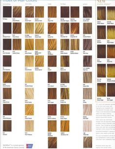 Hair Color Ideas Finding the Best Hair Color For You kastanienbraun Purple Brown Hair, Beige Blonde Hair, Honey Blonde Hair Color, Blonde Hair With Highlights, Blonde Hair Swatches, Hair Color Swatches, Hair Color Names, Cool Hair Color, Hair Colour