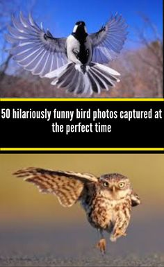 50 hilariously funny bird photos captured at the perfect time Shoebill Stork, Happy Valentines Day Wishes, One Duck, Hanging Picture Frames, Baby Chickens, Funny Birds, Baby Goats, Weird Stories, Weird World