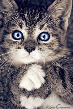 Pretty kitty - What more to say other than we just LOVE cool stuff!
