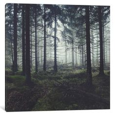 "Loon Peak Through The Trees Photographic Print on Wrapped Canvas Size: 18"" H x 18"" W x 0.75"" D"