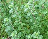 Bylinky v kuchyni Herbs, Plants, Food, Essen, Herb, Meals, Plant, Yemek, Eten