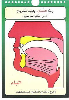 مخارج الحروف العربية للدكتور/أيمن سويد - الصفحة 4