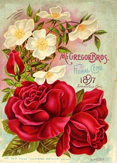 McGregor Bros. seed package with red roses