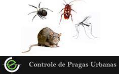 Solicite agora mesmo os serviços de controle de pragas urbanas da Exterminex, aqui nossos profissionais são preparados para lhe oferecer o melhor controle de praga urbanas de São Paulo.
