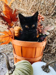 10 Cats Enjoying The Fall Season [PICTURES If your cat is more of an outdoor stroller, they've likel Fall Season Pictures, Fall Pictures, Holiday Pictures, Fall Photos, Herbst Bucket List, Thanksgiving Wallpaper, Thanksgiving Background, Fall Wallpaper, Halloween Disfraces