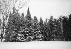 Christmas Memories #Christmas #memories #life #retired #transitions #Bruce #Wisconsin #pics #photographs #landscape