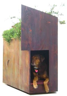 Dog house by Eric Lloyd Wright, the grandson of the famous architect, Frank Lloyd Wright