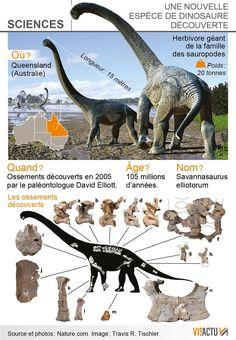 Savannasaurus elliotorum.