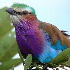 WEBSTA @ bird_brilliance - .Bird Brilliance Presents: @jenadam13 .. 🔸🔸Featured…