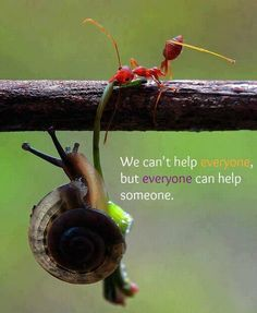 Amazing Quote with a snail and a red soldier ant.