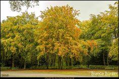 Volkspark Jungfernheide (Okt 2016) #Berlin #Deutschland #Germany #biancabuergerphotography #igersgermany #igersberlin #IG_Deutschland #IG_berlincity #ig_germany #shootcamp #shootcamp_ig #pickmotion #berlinbreeze #diewocheaufinstagram #berlingram #visit_berlin #Herbst #autumn #canon #canondeutschland #EOS5DMarkIII #5Diii #Natur #nature #Charlottenburg #Landschaft #landscape #tree #Baum