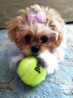 Okay, okay, you can keep the tennis ball. But we want the bow.