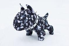 Camo the Bull Terrier