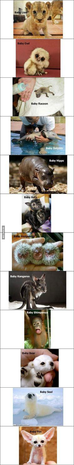 Baby #Baby Animals #cute baby Animals| http://cutebabyanimalsgallery796.blogspot.com – More at http://www.GlobeTransformer.org