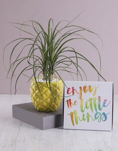 Bring out the fun in spring with playful Spring Day gifts from NetFlorist. Surprise a loved one with creative plant gifts that'll stand out wherever they decide to display them. They're fabulous and colourful, just like the springtime. Spoil your loved ones today! Pony Tail Palm, Palm Plant, Spoil Yourself, Personalized Wine, Spring Day, The Fresh, Cool Gifts, Pineapple, Place Card Holders