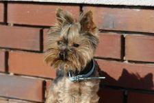 El top 10 de las razas de perros mas cariñosas del mundo http://www.cuidandotumascota.com/blog/posts/el-top-10-de-las-razas-de-perros-mas-carinosas-del-mundo
