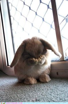 Bunny Closes His Eyes for Hide and Seek - September 28, 2011