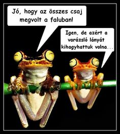 Funny Pictures, Lunch Box, Jokes, Lol, Comics, Animals, Meme, Google, Frogs