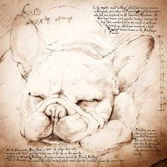 French Bulldog Sleeping - Framed Giclee print on archival paper. From an original drawing in the style of Leonardo Da Vinci