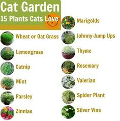 Top 10 tips for creating a cat-friendly garden - Jeana Peltier - # . - Top 10 tips to create a cat-friendly garden – Jeana Peltier - Cat Safe Plants, Cat Plants, Garden Plants, Indoor Plants, Plants Toxic To Cats, Houseplants Safe For Cats, Poisonous Plants, Fruit Garden, Cat Garden