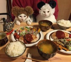 いいね!13.1千件、コメント549件 ― @naomiunoのInstagramアカウント: 「お豆腐ハンバーグ♩ お母はん4/5の昨日やけども36歳なったから、クマとパンダがお祝いに駆けつけてくれました〜♩ でもあんまり、お祝いする気はないらしい…。…」