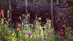 Hyönteiset ovat elintärkeitä puutarhalle. Grow Your Own, Landscape, Flowers, Plants, Balcony, Outdoors, Scenery, Balconies, Plant