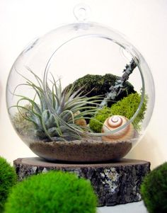 air plants planter ball - had one of these killed it in under a week! :(