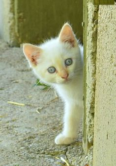 Huron County, Sunsets, Cats, Animals, Gatos, Animales, Animaux, Kitty, Sunset