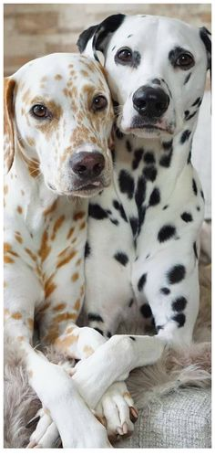 Animals And Pets, Cute Animals, Ugly Dogs, Dog Pin, Dogs Of The World, Pit Bulls, Pet Dogs, Animales, World