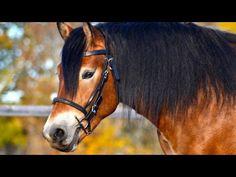 La tête du cheval en image