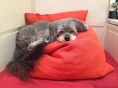 New blog entry from Bethenny Frankel's furry baby, @CookieDaBooBoo