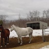 Horse people - don't miss this once in a lifetime opportunity to own your own hobby farm located on wonderful Williams Rd. This farm offers over 36 acres of agriculturally zoned land and numerous sheds for the animal's comfort along with a 54' x 72' barn and a 28' x 75' barn. The property also boasts a barn style home to make this property the complete package. Upper level could be finished to have more living area. Bed & Breakfast potential also