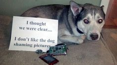 After taking 10 dog shaming photos (all for different reasons), I ate my mom's digital camera...I thought we were clear, I don't like the dog shaming photos