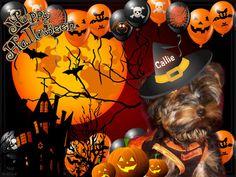#piZap by AngieNapierSutherland  halloween