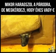 Puns, Haha, Funny Pictures, Jokes, Hungary, Smiley, Meme, Videos, Humor
