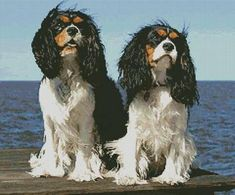 Two Cavalier King Charles - cross stitch pattern designed by Tereena Clarke. Category: Dogs.