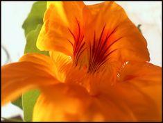 Wisteria, Home And Garden, Solar, Rose, Cottages, Garden Ideas, Gardens, Animals, Plant